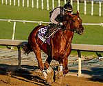 October 26, 2019 : Breeders' Cup Dirt Mile entrant Giant Expectations, trained by Peter A. Eurton, exercises in preparation for the Breeders' Cup World Championships at Santa Anita Park in Arcadia, California on October 26, 2019. Scott Serio/Eclipse Sportswire/Breeders' Cup/CSM