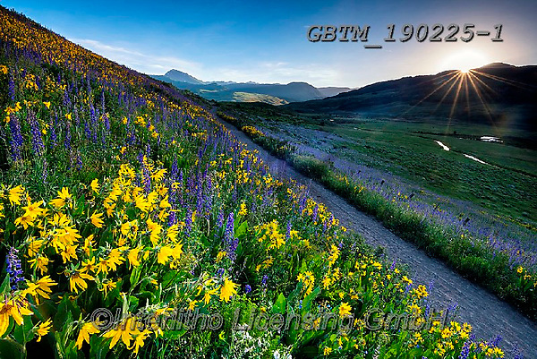 Tom Mackie, LANDSCAPES, LANDSCHAFTEN, PAISAJES, photos,+America, American, Colorado, Crested Butte, North America, Tom Mackie, USA, atmosphere, atmospheric, beautiful, blue, dramati+c outdoors, flower, flowers, footpath, hill, hills, hillside, horizontal, horizontals, landscape, landscapes, larkspur, mules+ear sunflower, nobody, path, pathway, pathways, scenery, scenic, sunburst, wildflower, wildflowers, yellow,America, American+, Colorado, Crested Butte, North America, Tom Mackie, USA, atmosphere, atmospheric, beautiful, blue, dramatic outdoors, flowe+,GBTM190225-1,#l#, EVERYDAY