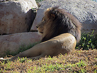 09.01.2013: San Diego Zoo Safari Park