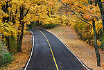 A Blacktop Road Through The Park In Autumn, Sharon Woods, Southwestern Ohio, USA
