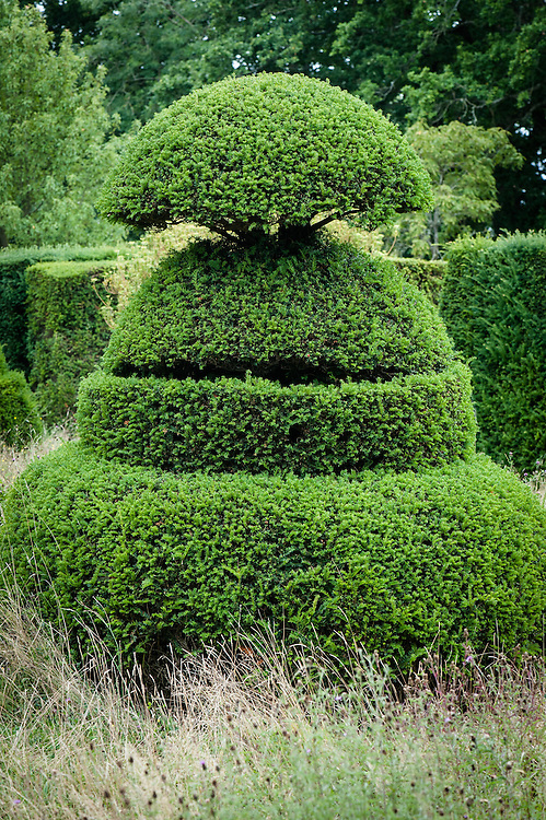 Yew topiary at Great Dixter, East Sussex, mid August.