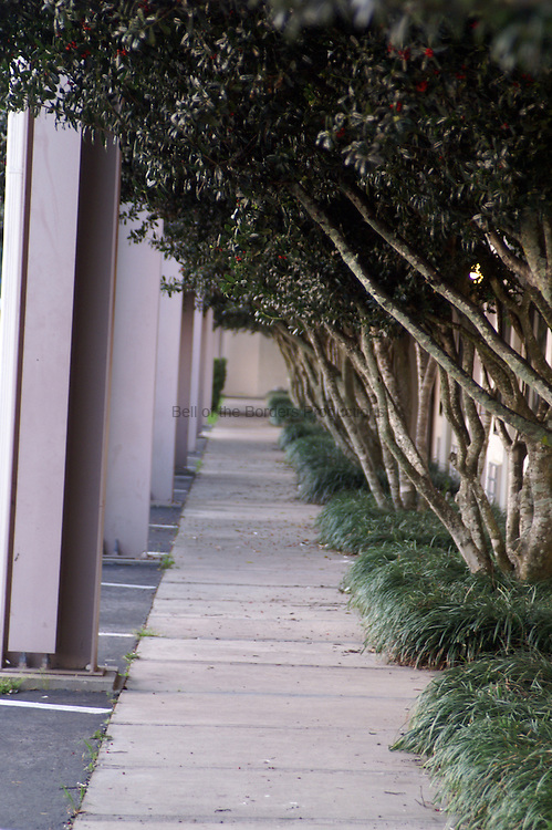 Ranks of large holly trees line the sidewalk of a small motel, providing a more elegant feel that would normally be expected.