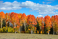 High country colors September 18, 2014 around Cedar Breaks , Utah