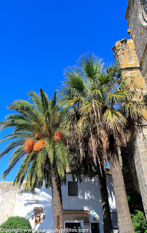 Palm trees and white buildings, Vejer de la Frontera, Cadiz Province, Spain