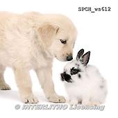 Xavier, ANIMALS, REALISTISCHE TIERE, ANIMALES REALISTICOS, FONDLESS, photos+++++,SPCHWS612,#A#