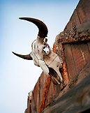 USA, Montana, bull skull above a barn door, Mountain Sky Guest Ranch