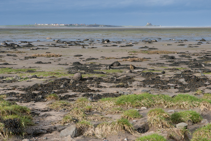 Across Fenham Flats SSSI towards Lindisfarne at low tide.
