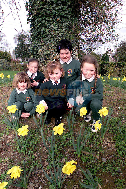 Gemma Matthews, Nicola McCabe, Sinead Scott, Melissa Fox and Sarah McCartney, pupils from Scoil Mhuire na Trocaire, Ardee with the 276 daffodils sponsered by Sean Kerr Providers Ltd., Ardee, as part of thier millenium programme of events..Picture Paul Mohan Newsfile