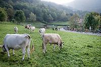 locals witnessing the peloton descending the Colle Gallo (763m)<br /> <br /> 113th Il Lombardia 2019 (1.UWT)<br /> 1 day race from Bergamo to Como (ITA/243km)<br /> <br /> ©kramon