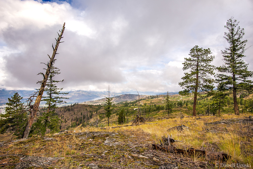Fine Art Landscape Photograph of the trees high in the mountains at the Garnet Fire Interpretative site in Penticton, British Columbia Canada.