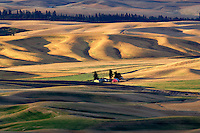 Wheat field and  barn. The Palouse. Washington
