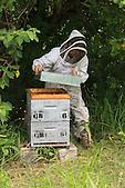 Christelle Appaganou (apicultrice à Bourail) retirant le toit de la ruche