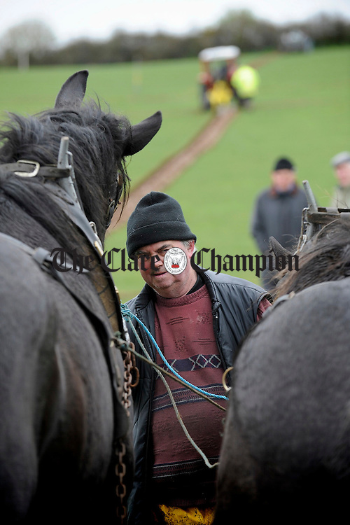 Sonny Egan, Abbeydornet, Co. Kerry leading his charges competing in the Clare Ploughing Association's county championships at Newmarket On Fergus. Photograph by John Kelly.