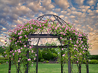 Rose arbor. Oregon Garden. Oregon