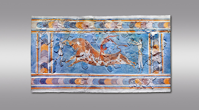 The Minoan 'Bull leaping' fresco depicting an athlete leaping over a bulls back,  Knossos-Palace, 1600-1400 BC . Heraklion Archaeological Museum.,grey background<br /> <br /> there are 3 participants, two white skinned women and one brown skinned man. One female athele is restraining the bull ny the horns to slow it down as the male athlete performs a backward summersault ober the bulls back. The second female athlete waits to catch the leaper.<br /> <br /> The fresco was found on the east side of the palace of Knossos together with fragments depicting different stages of bull leaping.