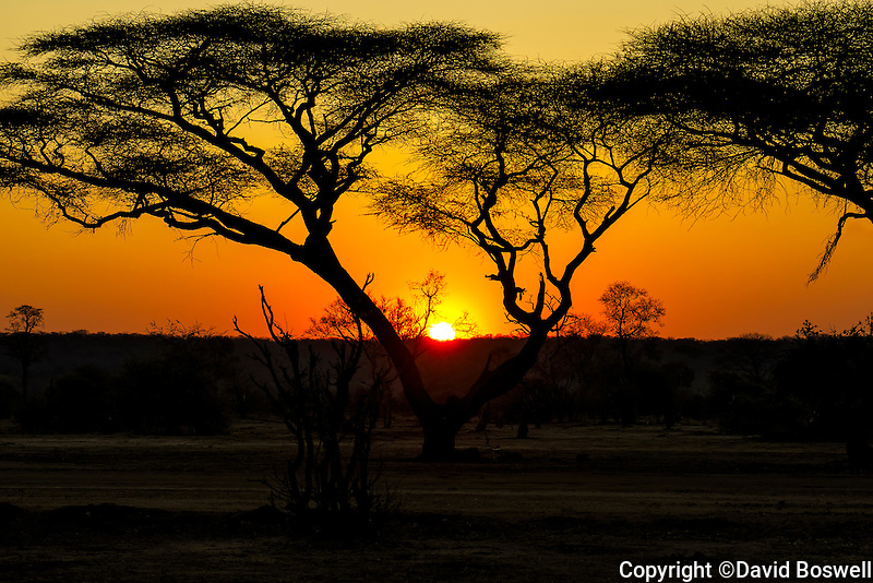 A typical African sunset turns the sky to fire in Zambezi National Park, Zimbabwe.