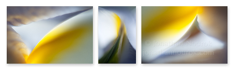 Close-up photographic triptych of light blue iris flowers.