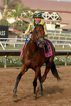 DEL MAR, CA  SEPTEMBER 2:  #8 Ride a Comet, ridden by Drayden Van Dyke returns to the connections after winning the  Del Mar Derby (Grade ll) on September 2, 2018 at Del Mar Thoroughbred Club in Del Mar, CA.(Photo by Casey Phillips/Eclipse Sportswire/Getty ImagesGetty Images
