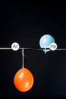 HELIUM AND ARGON FILLED BALLOONS<br /> (Variations Available)<br /> The Two Balloons Are Filled To The Same Volume<br /> After 10.5 hours the helium filled balloon is smaller than the Argon filled balloon. Helium effuses out of the balloon faster than Argon.  Light atoms or molecules effuse through the pores of the balloons faster than heavy atoms or molecules.