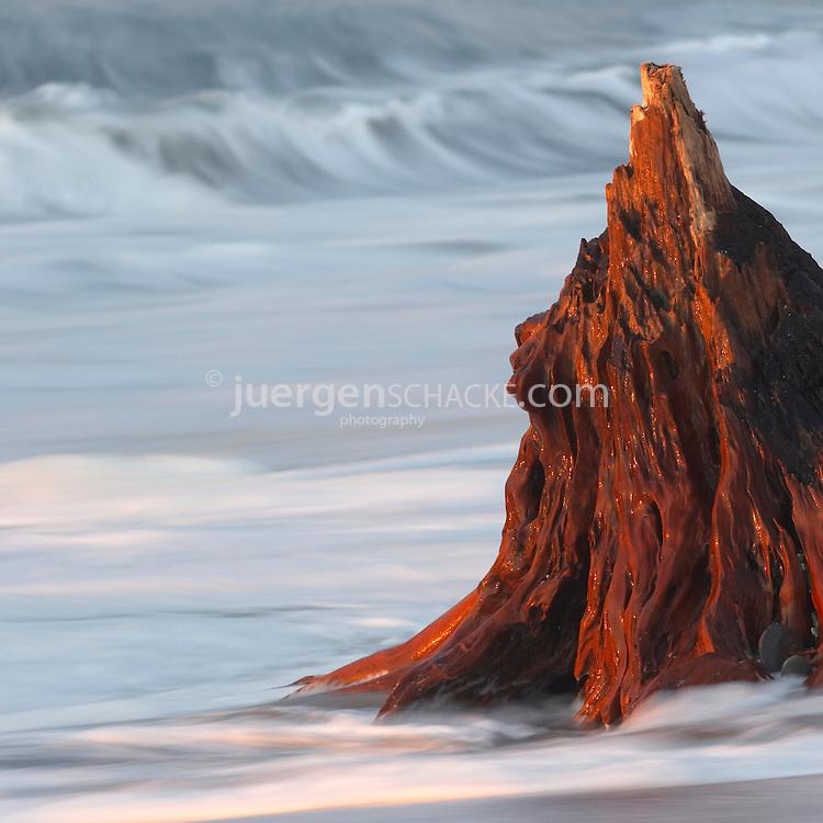 driftwood stump on the beach