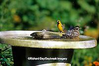 01382-045.20 American Robin (Turdus migratorius) & Orchard Oriole (Icterus spurius) immature male in bird bath, Marion Co. IL
