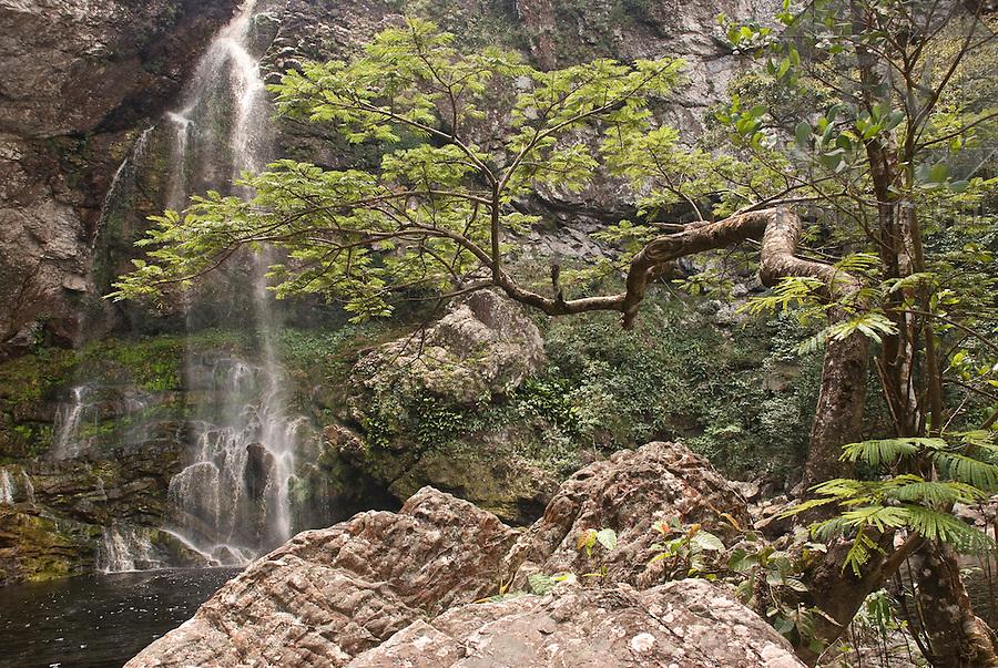 &Aacute;rvore e Cachoeira da Fuma&ccedil;a de Cima na Serra da Fuma&ccedil;a   Tree and the Upper Smoke Waterfall in the Smoke Mountain Range<br /> <br /> LOCAL: Pindoba&ccedil;u, Bahia, Brasil<br /> DATE: 09/2007<br /> &copy;Pal&ecirc; Zuppani