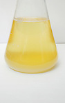 A yellow liquid in a Erlenmeyer flask. Royalty Free