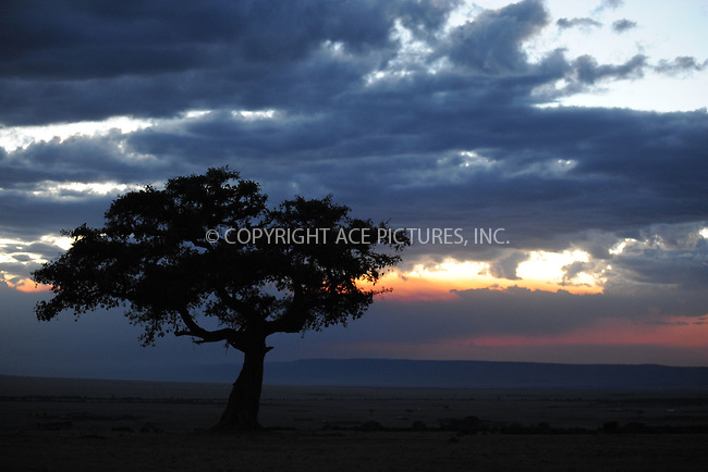 WWW.ACEPIXS.COM<br /> March 6, 2016 New York City<br /> <br /> Acacia Tree at sunset in Maasai Mara National Reserve on March 6, 2016 in Kenya.<br /> <br /> Credit: Kristin Callahan<br /> web: http://www.acepixs.com