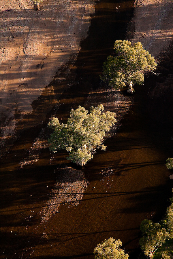 River Red Gums in the Fink River, taken from the air after recent rain