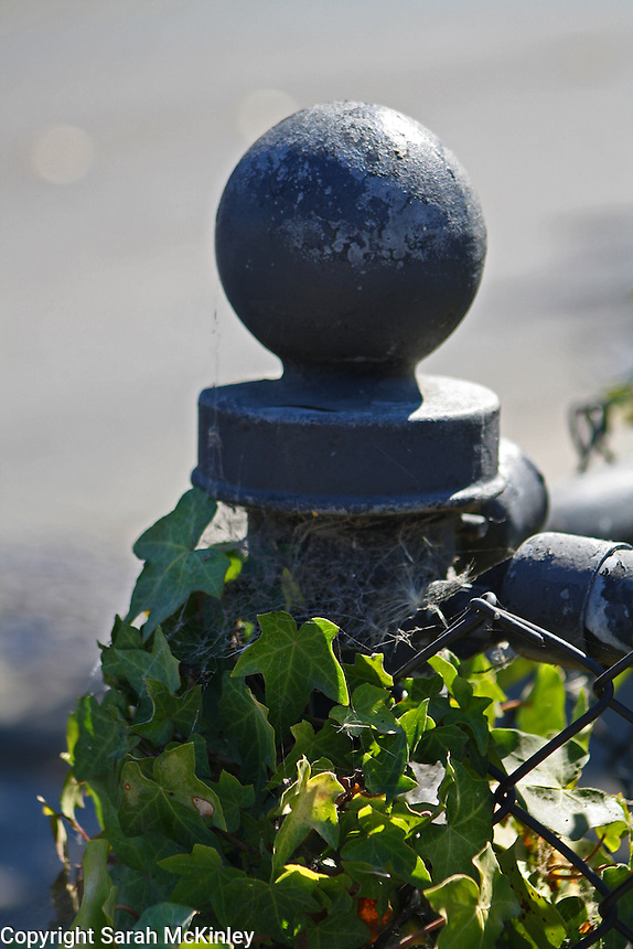 Ivy covers a metal fencepost on Railroad Square in Santa Rosa in Sonoma County in Northern California.