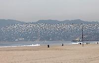 SANTA MONICA-ESTADOS UNIDOS. Las playas de Santa Monica y las bandadas de gaviotas son unos de los atractivos turisticos de esta ciudad del condado de Los Angeles.  Photo: VizzorImage