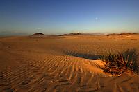 Sand dunes at sun rise, Corralejo, Fuerteventura, Canary Islands, Spain. May 2007.