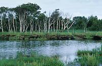 """Moorweiher, Moor, Weiher, Tümpel in einem Moor, Hochmoor, Blick auf """"Schwimmendes Moor von Sehestedt"""", Niedersachsen, Deutschland mit Moorbirken"""