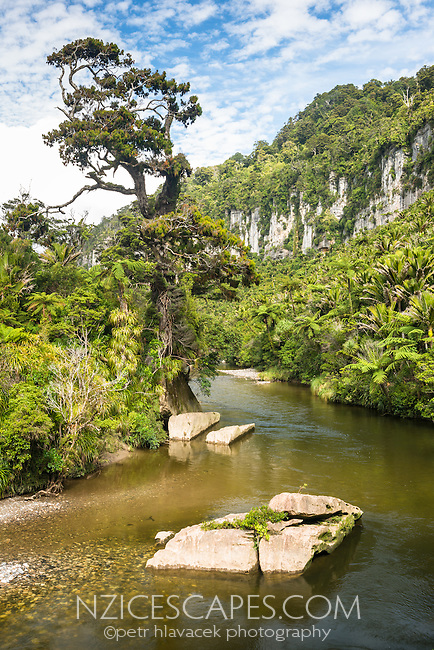 Scenic Pororari River through native forest with limestone cliffs in Punakaiki, Kahurangi National Park, Buller Region, West Coast, New Zealand, NZ