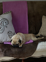 A pug snoozes amidst the soft furnishings on the living room sofa