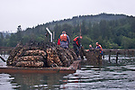 Tarboo Watershed Program, created by the Northwest Watershed Institute, Estuarine restoration, Tarboo Creek, Tarboo Bay, Tarboo Valley brought back to viable salmon habitat while protecting wildlife resources, Dabob Bay, Hood Canal, Jefferson County, Olympic Peninsula, conservation, Washington State, Pacific Northwest,