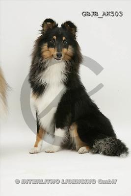 Kim, ANIMALS, fondless, photos(GBJBAK503,#A#) Tiere ohne Fond, animales sind fondo
