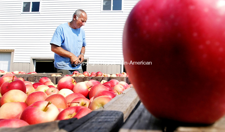 BETHLEHEM, CT. 07 SEPTEMBER 2007-090707SV05--Tom March checks the quality of apples coming from the fields as large bins of apples sit on a truck at March Farms in Bethlehem Thursday. The farm has started picking apples this week.<br /> Steven Valenti Republican-American