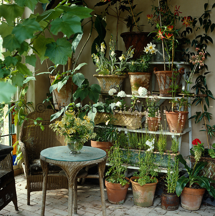 Terracotta pots are lined up on an etagere and a old wicker chair and matching table furnish a corner of the conservatory