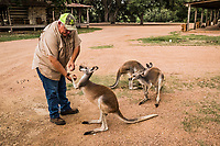 Hunting guide Buck Watson feeds Kangaroo's corn at the Ox Ranch, on the 15th of August, in Uvalde, Texas, USA. <br /> Photo Daniel Berehulak for the New York Times<br /> The three Kangaroo's that live in front of the lodge are mainly for attraction purposes, and not for hunting. They greet guests on arrival, as they are often fed corn by the newcomers and guides.