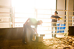 Tony Brunetti, originally of New York, works with his horse 'Brooklyn' named for his home city at his training facility in Colorado.  Brunetti is training the horse for the Extreme Mustang Makeover in which trainers have 100 days to take a horse from wild to show quality.  After nine weeks, Brunetti is working on polishing Brooklyn to perform tricks like laying down, standing on his back, and jumping through a ring of fire.