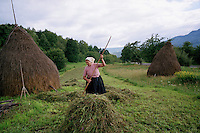 ROMANIA / Maramures / Breb / 01.09.2006..Maria Codria gathers freshly cut hay into small piles for a haystack to be made the following day...© Davin Ellicson / Anzenberger