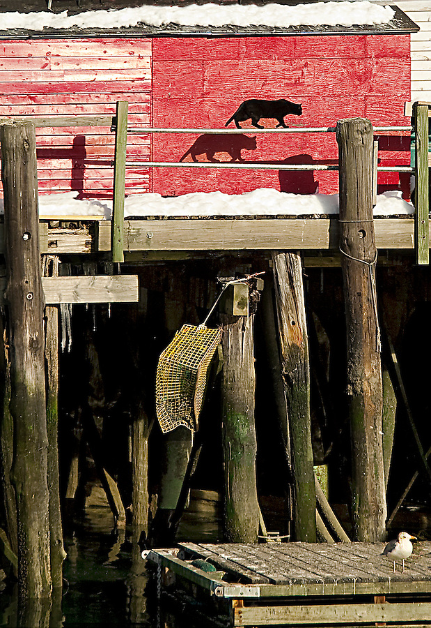 Feline Shadow