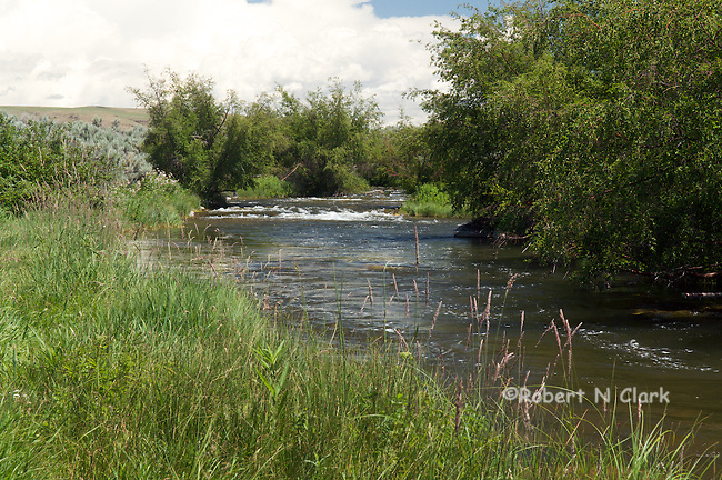 Lower Silver Creek near Carey, Idaho