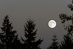A rare blue moon rises over three Douglas Fir trees in Port Orchard, Washington on August 20, 2013.  The blue moon is the second full moon to occur in a single month. It's  also known as the Sturgeon Moon. According to the Old Farmer's Almanac, fishing tribes near the Great Lakes are credited with naming this moon – identifying the season when ample sturgeon were caught. Jim Bryant PhotoSunset over a ridgeline in Eatonville, WA. looking from Mt. Rainier. Rainier is a heavily glaciated, dormant volcano surrounded by alpine parks. The 14,411 foot volcano which covers 228,480 acres was designated a National Park in 1899. Washington. Jim Bryant Photo. ©2013. All Rights Reserved.A rare blue moon rises over three Douglas Fir trees in Port Orchard, Washington on August 20, 2013.  The blue moon is the second full moon to occur in a single month. It's  also known as the Sturgeon Moon. According to the Old Farmer's Almanac, fishing tribes near the Great Lakes are credited with naming this moon – identifying the season when ample sturgeon were caught. Jim Bryant Photo