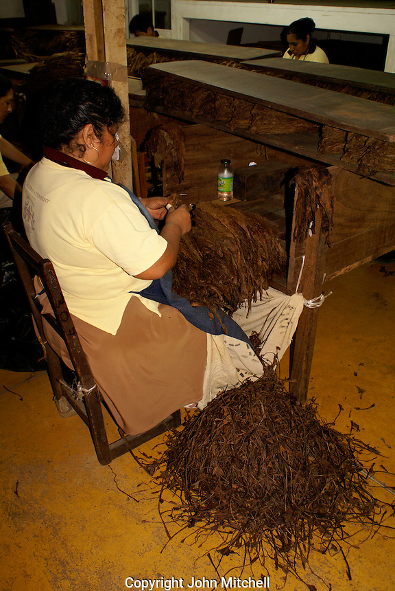 Female worker in the Tabacalera Alberto Turrent  cigar factory near San Andres Tuxtla Veracruz, Mexico              .