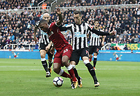 Liverpool's Daniel Sturridge shields the ball from Newcastle United's Javi Manquillo<br /> <br /> Photographer Rich Linley/CameraSport<br /> <br /> The Premier League -  Newcastle United v Liverpool - Sunday 1st October 2017 - St James' Park - Newcastle<br /> <br /> World Copyright &copy; 2017 CameraSport. All rights reserved. 43 Linden Ave. Countesthorpe. Leicester. England. LE8 5PG - Tel: +44 (0) 116 277 4147 - admin@camerasport.com - www.camerasport.com
