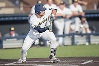 Michigan Wolverines catcher Harrison Wenson (7) squares to bunt during the NCAA baseball game against the Eastern Michigan Eagles on May 16, 2017 at Ray Fisher Stadium in Ann Arbor, Michigan. Michigan defeated Eastern Michigan 12-4. (Andrew Woolley/Four Seam Images)
