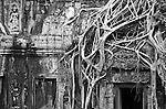 "Tomb Raider Tree 02 - Strangler fig and silk-cotton tree roots around the ""Tomb Raider"" doorway, Ta Prohm Temple, Angkor, Cambodia"