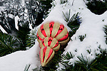 Outside christmas tree ornaments covered in snow, Jamison Square